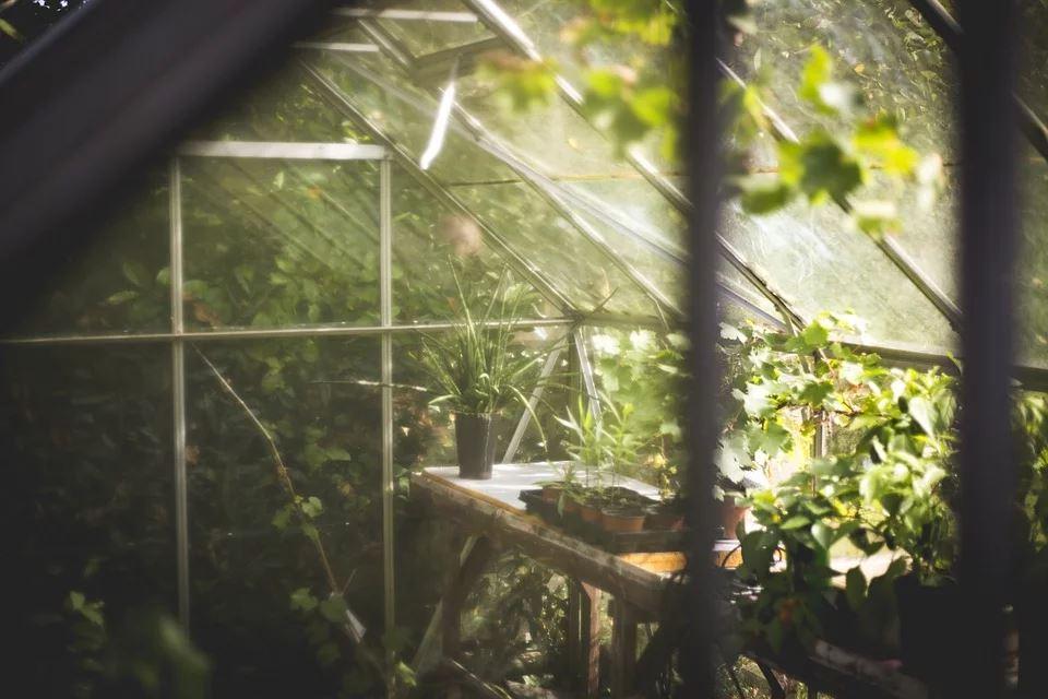 Dyrk egne afgrøder med drivhuse og vægdrivhuse i haven