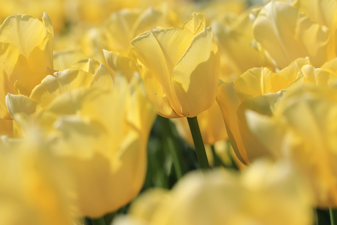 Bliv klar til foråret